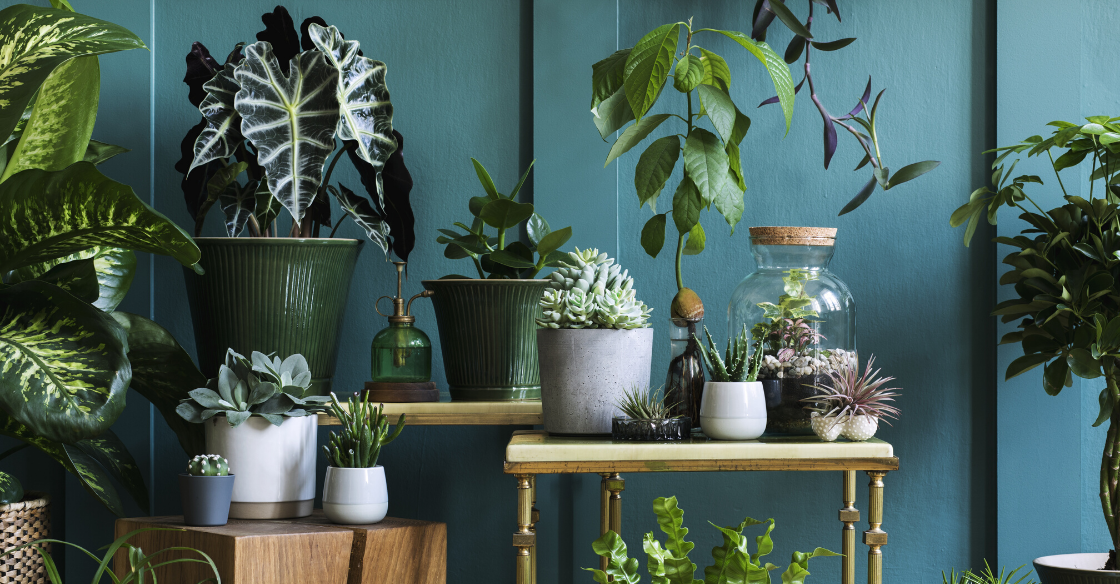 Add Greenery into your home for a summer staycation