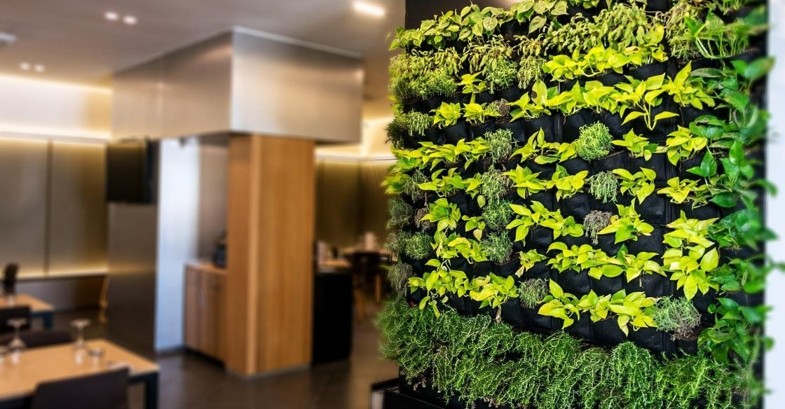 Indoor greenery at a restaurant