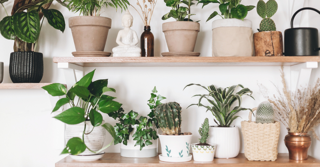 Collection of house plants sitting on shelves